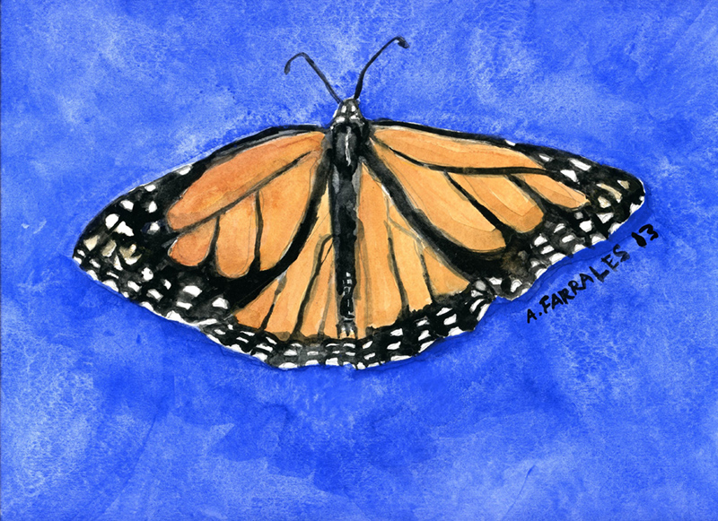 Monarch Butterfly on Blue Greeting Card © Anjuli 2017