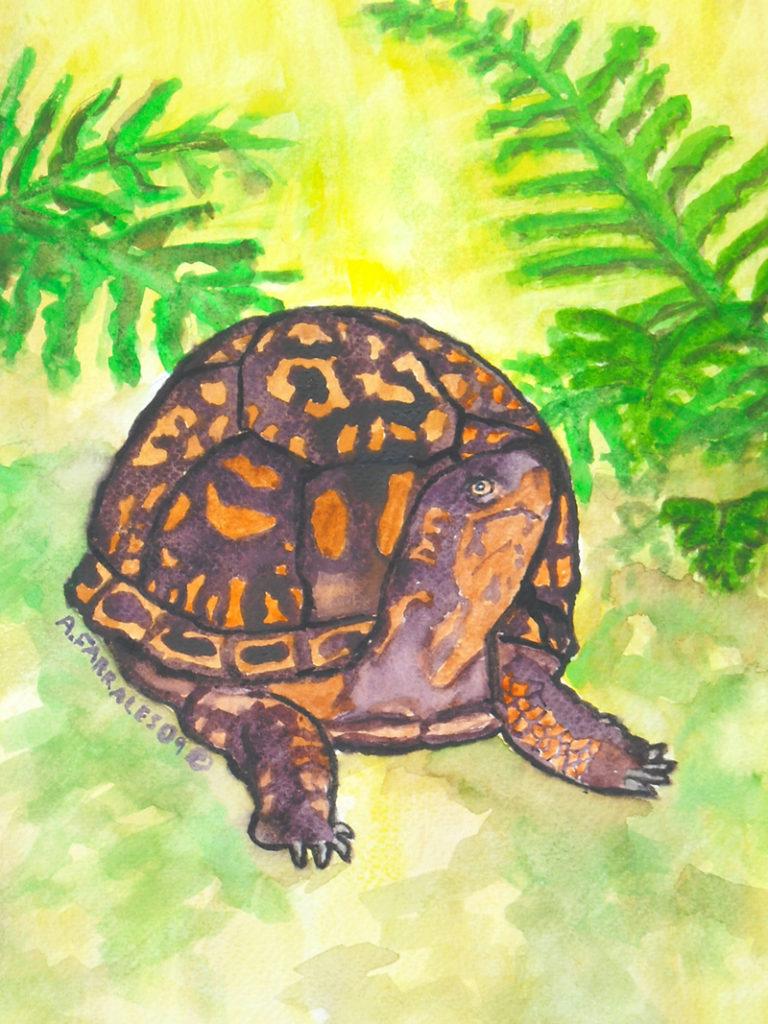 Turtle Greeting Card © Anjuli 2017