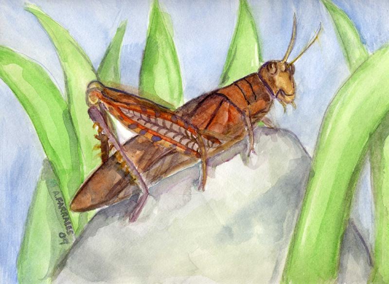 Grasshopper © Anjuli 2017