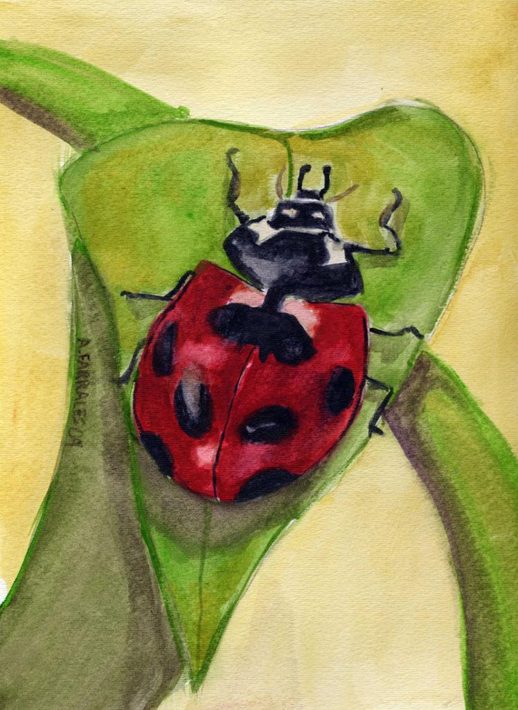 Ladybug © Anjuli 2017