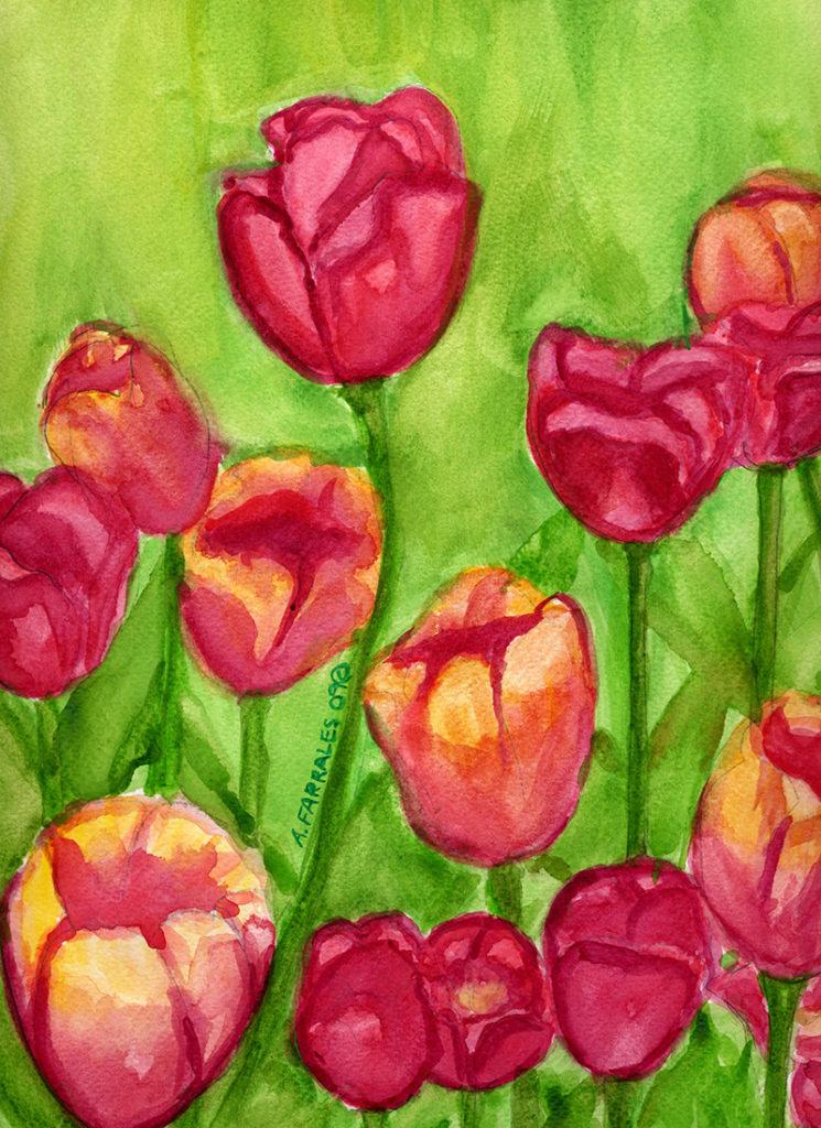 tulips © Anjuli 2009